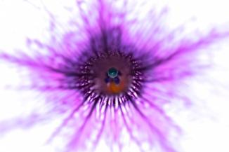 flower_interior_67