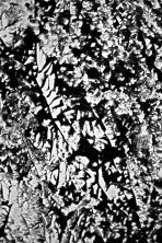 inkscape_2_51