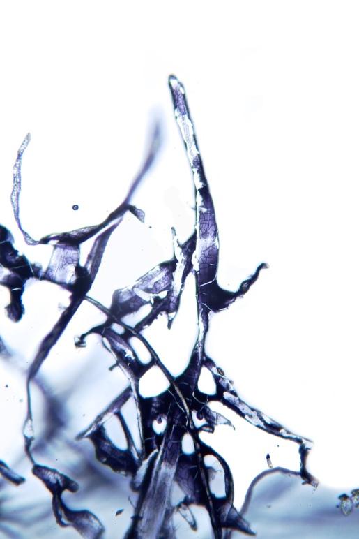 splash_32